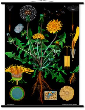 hagemann.de poster botanisch MOMspiration.nl